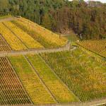 Scegli tu che te ne intendi: vini del Friuli Venezia Giulia