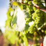 Il vino per gli altri – Wine For Good